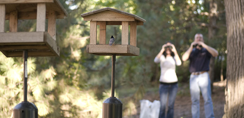 Millikin Wild Bird Feeding Research