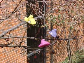 photo of Peeps climbing trees